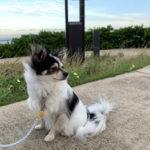 【犬と公園散歩】浦安 高洲海浜公園の展望台から東京湾を望む