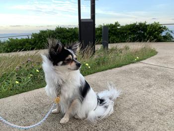 浦安市 高洲海浜公園へ犬と散歩