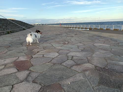 千葉県浦安市「高洲海浜公園」