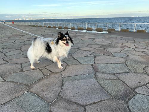 高洲海浜公園 海沿いの犬散歩