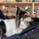 【アルペンアウトドアーズフラッグシップストア柏店】犬連れ情報