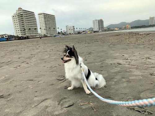 鴨川・犬と海散歩
