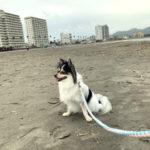 【鴨川・犬連れ海散歩】海開き間近の前原海水浴場と大山千枚田を散策