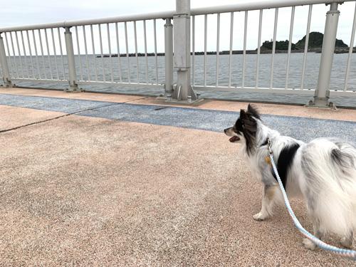 海を見ながら犬と散歩