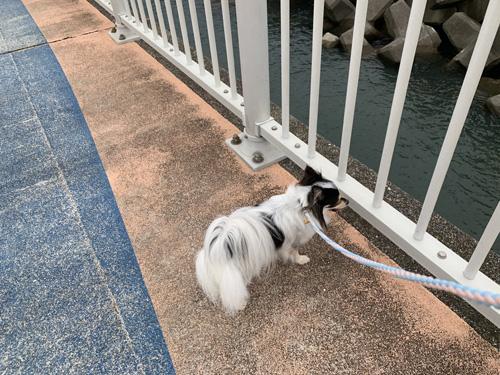 フィッシャリーナ鴨川を犬と散歩