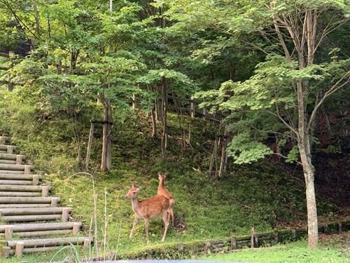 中禅寺湖畔散歩 鹿発見