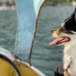 中禅寺湖で犬とスワンボート