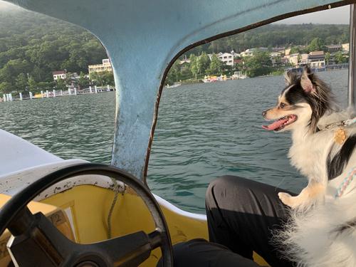 犬 スワンボート