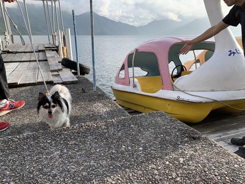 犬とスワンボート 中禅寺湖