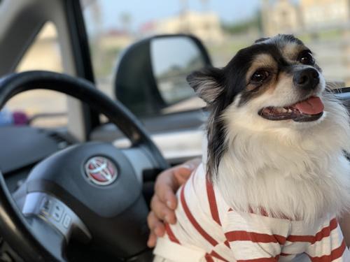 館山 犬連れドライブ