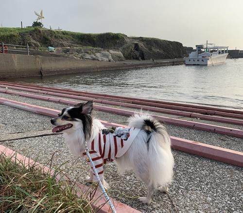 野島崎灯台を犬と散歩