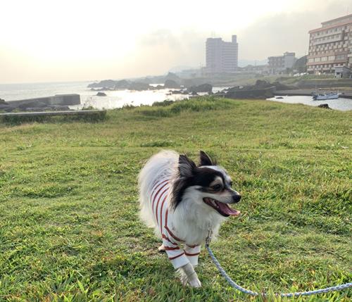 野島崎灯台 犬連れ