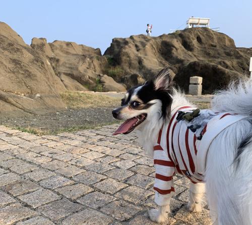 野島崎灯台 白いベンチ