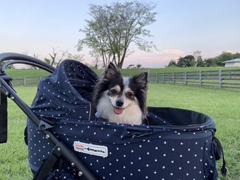 マザー牧場 ナイトファーム 犬連れ