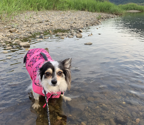 茨城 犬と川遊び