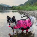 【茨城・犬と川遊び】久慈川で犬かきの練習するつもりがただの水遊び