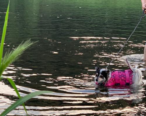 犬と川遊び 久慈川