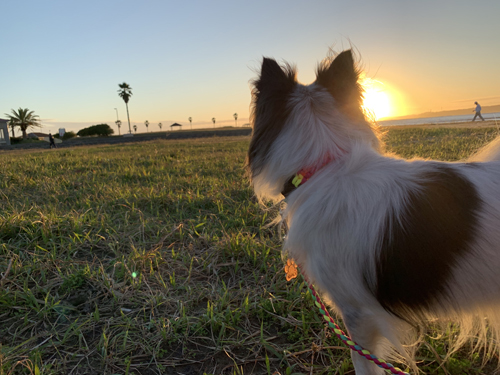 銚子 夕陽スポット 犬連れ