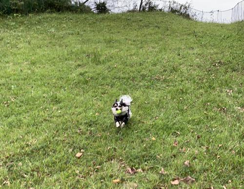 犬が駆けまわる