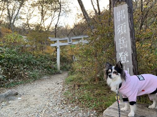 茶臼岳・犬連れ
