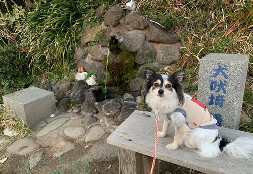 犬吠埼湧水と犬吠埼遊歩道 犬連れ