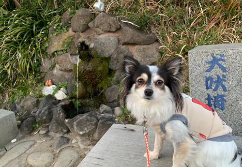 遊歩道から犬吠埼湧水