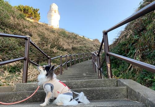 犬吠埼灯台までの階段