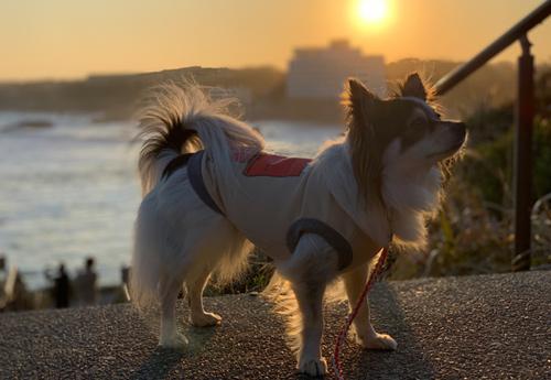 犬吠埼遊歩道 犬と散歩