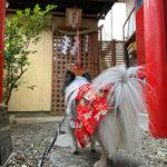 【千葉 犬と神社】ペット専用神社「愛育神社」へ今年も初詣へ行ってきた