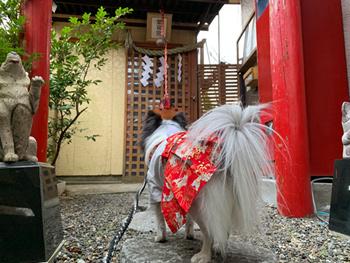 千葉 犬と神社 愛育神社