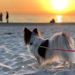 【千葉 犬と海散歩】稲毛海浜公園の白砂ビーチから見るダイヤモンド富士