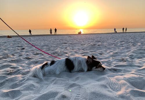 犬連れ 稲毛海浜公園