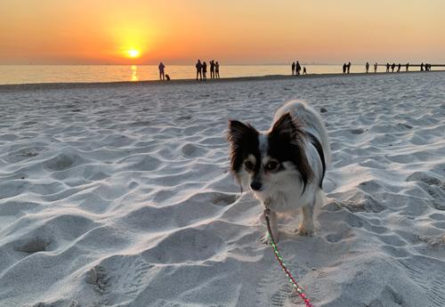 いなげの浜 犬