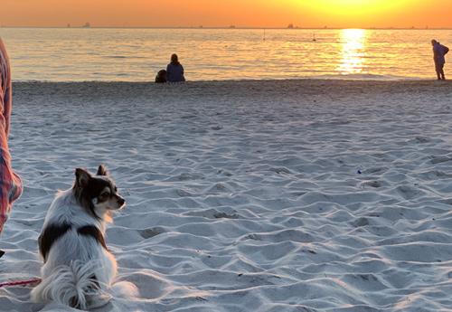 いなげの浜 白砂ビーチ
