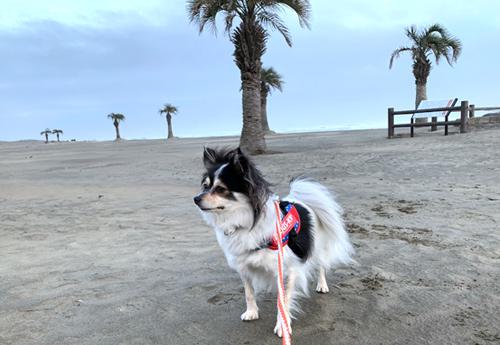 本須賀海岸 犬と散歩