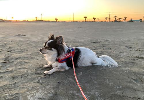 九十九里浜 海岸散歩
