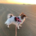 【九十九里浜 犬と海散歩】 ヤシの木が南国気分を高める♪ 本須賀海水浴場