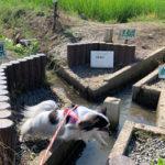 三県境 渡良瀬遊水地 犬連れ
