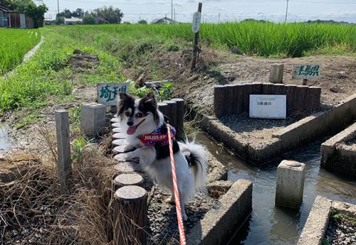 三県境(栃木・群馬・埼玉) 犬とお出かけ