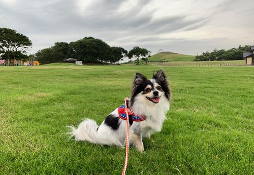 茨城 犬連れ 鹿島灘海浜公園 犬