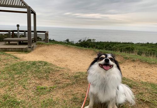 鹿島灘海浜公園 犬連れ