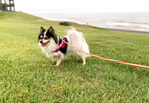 茨城 犬とお出かけ 鹿島灘海浜公園 海散歩