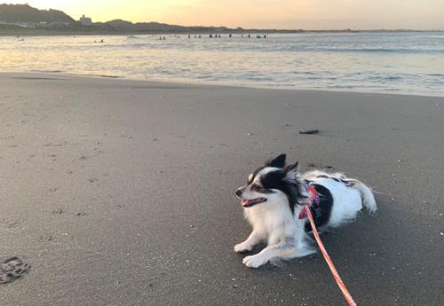 犬連れ 太東海岸(太東海水浴場)