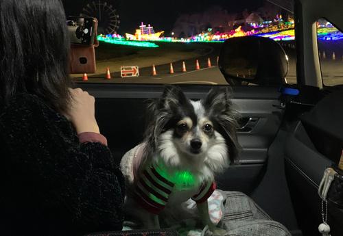 東京ドイツ村 イルミネーション 犬連れ