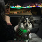 東京ドイツ村 犬連れ