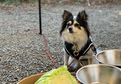 犬とキャンプ 有野実苑オートキャンプ場 犬連れデイキャンプ