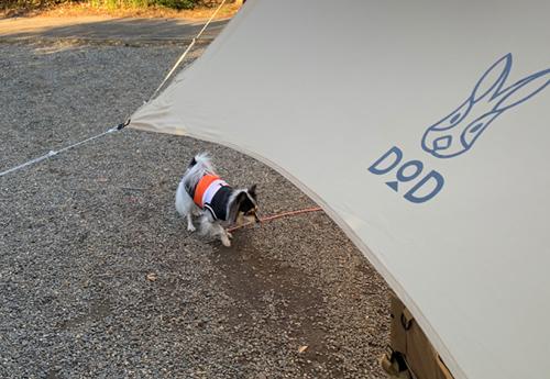 犬とデイキャンプ
